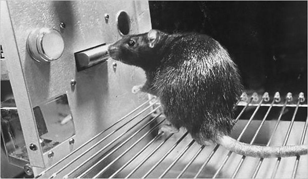 شرطی سازی عامل و آموزش به حیوانات