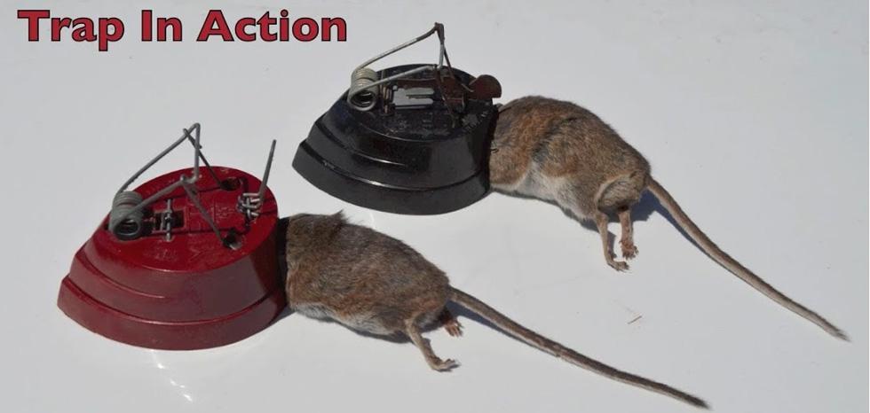 محصول جدید وتله موش