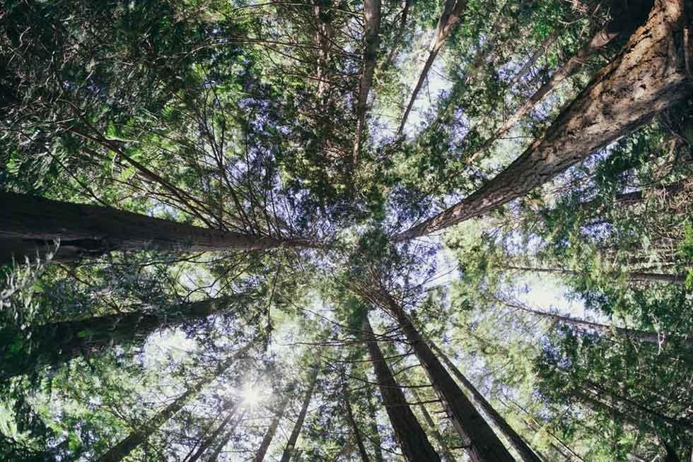 ریشههای کمال گرایی